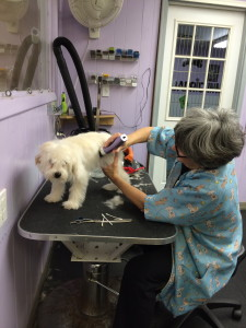 A dog being groomed at the The Barrie Inn in Woodmere.