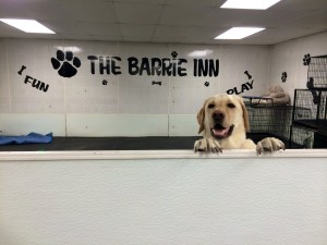 Your pets health and dog boarding at the Barrie Inn